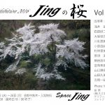 2016Jingの桜4DM 04